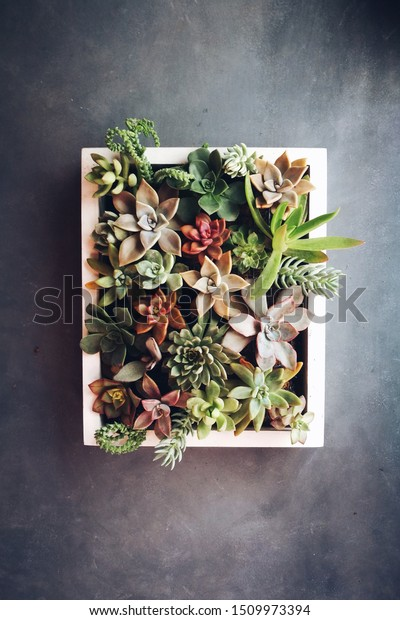 Living Succulent Picture Frame Desert Beauty Stock Photo Edit Now
