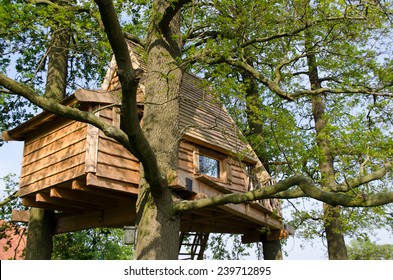 Living in a tree house surrounded by branches in the netherlands