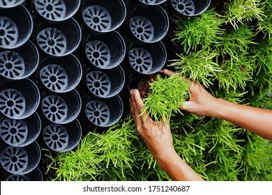 Living Wall Office Facade Corner.Green Wall, Bio Wall, Plants. Man make a Beautiful Vertical Garden.Air-filtering plant.