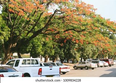 LIVINGSTONE, ZAMBIA - CIRCA NOVEMBER 2017: The main street in Livingstone, Zambia, a tourism centre for the Victoria Falls