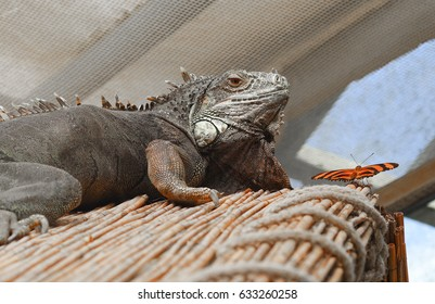 Lizard and a butterfly on a hut roof