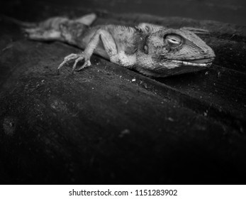 lizard carcass on the wood floor in black and white and selective focus
