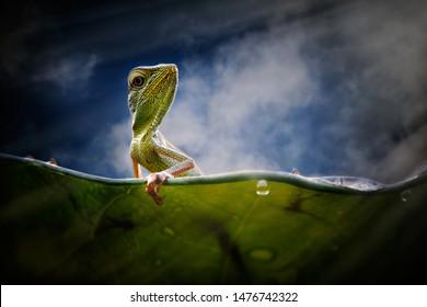 The lizard climb leaves to reach the sky