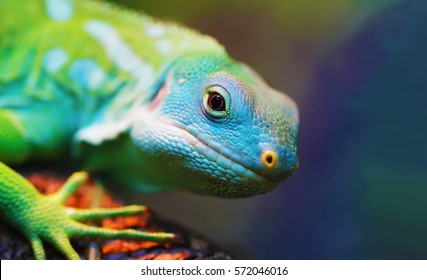 Lizard close up macro animal portrait photo