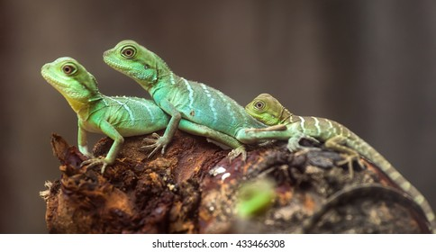 Lizard families together with the couple and child in the tree is looking to the future so cute when watching them in zoo