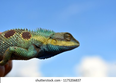 lizard head in bright blue sky white clouds