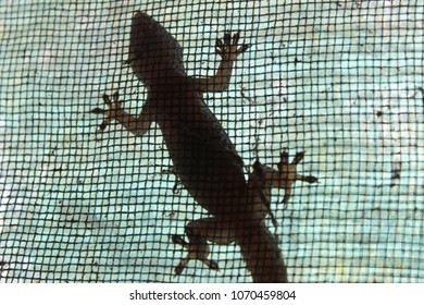 A lizard looking for food on the wall