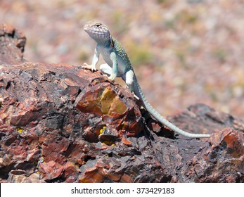 Lizard on fossils at Petrified Forest National Park