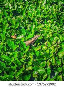 Lizard on a leaf green background