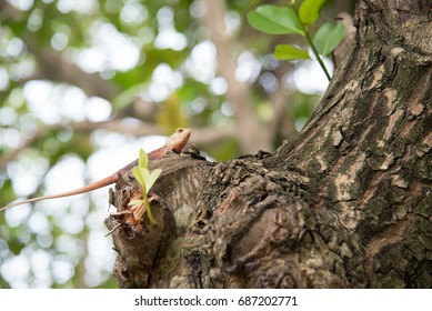 lizard on the tree