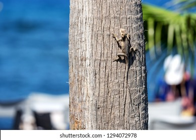 Lizard on the trunk of a palm tree against the blue sea - Paphos, Cyprus