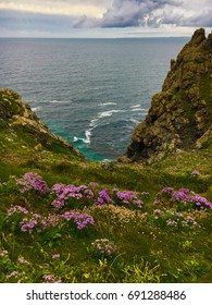 Lizard Point with thrift in the foreground pink