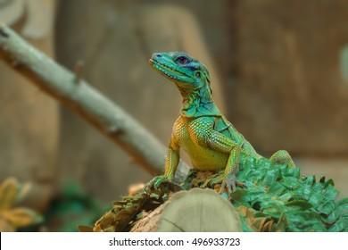 Lizard resting in a wood log