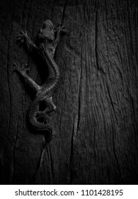 lizard 's carcass on wood floor in black and white concept