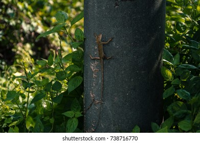 Lizard sitting on light pole enjoying morning sun.