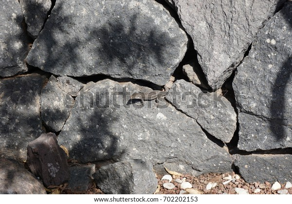 Lizard is sitting on the stone under the sun