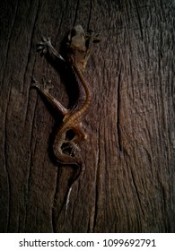 lizard' skeleton on brown wood texture and high contrast