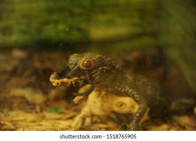 Lizard Snake Farm New Braunfels Texas