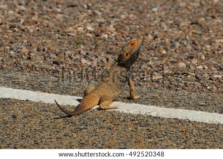 The Lizard takes a sunbath on the roadside