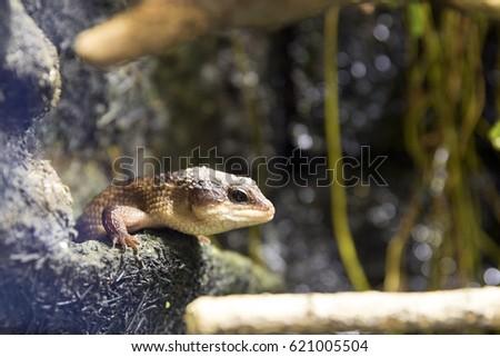 Lizard Terrarium Stock Photo Edit Now 621005504 Shutterstock