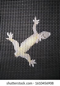 A lizard that hangs on the screen.