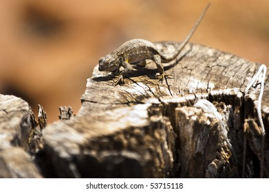 a lizard warms itself in the sun on an old log