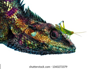 Lizard  of white background