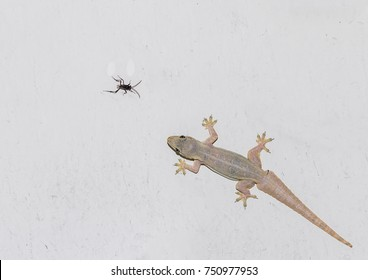 Lizards are eating insects on the wall.