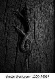 lizard's skeleton on wood floor inblack and white concept