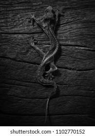 lizard's skeleton on wood texture