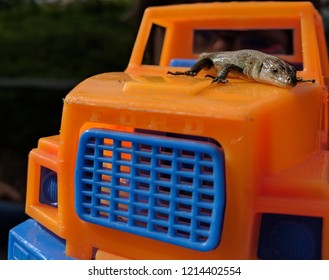 Lizzard on toy truck