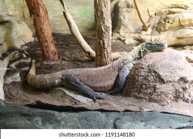 Lizzard resting at the zoo
