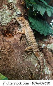 Lizzard sitting on tree at wild forest in Sri Lanka