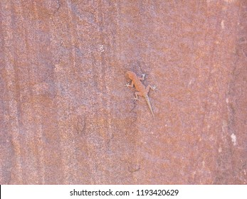 A lizzard/Gecko blending into the rock formation of the local surroundings