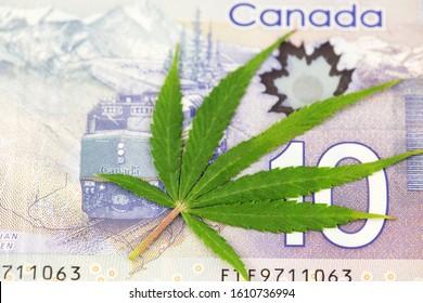 Ljubljana, Slovenia Europe January 2020, Cannabis Medical Marijuana Leaf on Canadian Dollar currency banknotes. Cannabis Medical Marijuana Business Concept. Canada  Cannabis Health Care