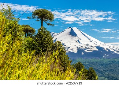 Llaima volcano, Conguillio National Park, Chile