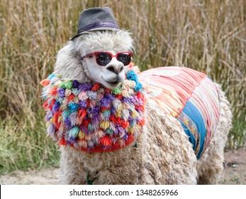 Llama in disguise, Peru