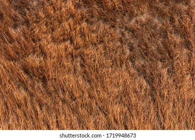 llama fur detailed texture, brown animal hair