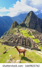 Llama standing at the view point of Machu Picchu, the lost city of the Andes. Machu Picchu is located above the Sacred Valley northwest of Cuzco, Machupicchu, Urubamba, Cusco, Peru.