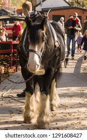 Llangollen United Kingdom - October 29 2018: Draft horse used to pull canal narrow boats for tourists along the 200 year old Llangollen canal in North Wales