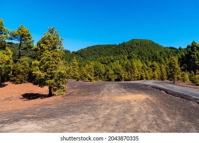 Llano del Jable Astronomical Viewpoint, Cumbre Vieja Volcano. Volcanic landscape with Canarian Pine Trees Forest, Pinus canariensis. Volcano of San Juan and Cabeza de Vaca mountain. La Palma, Canary