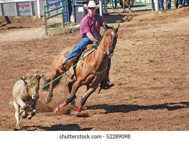 LLANO, TEXAS - APRIL 18: Cowboy roping  a steer at the Llano Crawfish Open Team Roping Competition April 18, 2008 in Llano, Tx.