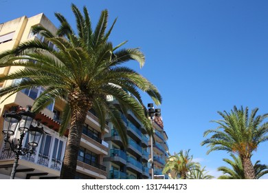 LLORET DE MAR, BARCELONA, SPAIN: July 13, 2016. City view during the summer. Palmtrees with building. Lloret De Mar is near Barcelona in Catalonia; Spain.