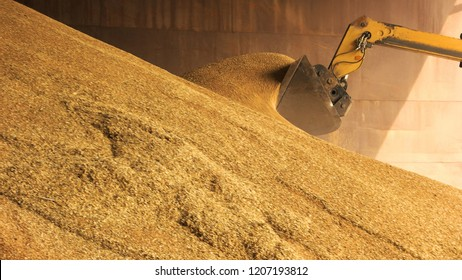 Loader bucket loading grain close up. Big heap of grain corn in a warehouse at food factory.