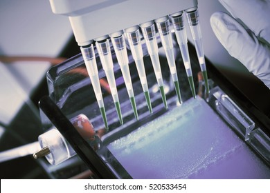 loading amplified DNA samples to agarose gel with multichannel pipette. Toned Image