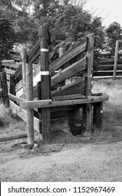 A loading chute on a California ranch facilitates loading cattle from corral to truck. (Monochrome image.)