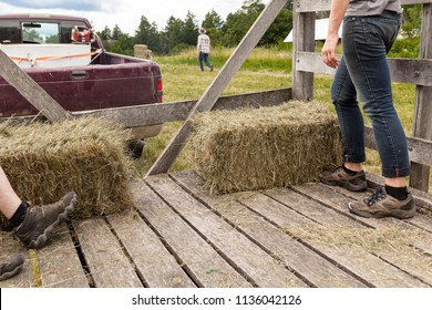 Loading Hay Bales into a wooden hay wagon outdoors in the farmland.