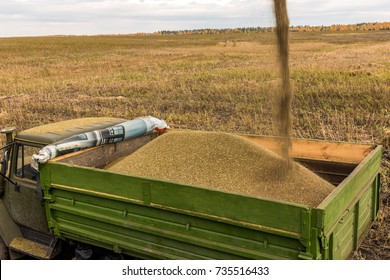 Loading hemp seeds into the truck after harvesting.