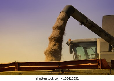 the loading of wheat grain
