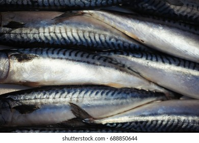 Loads of fresh raw mackerels at the fish market stand full frame - Fish and Seafood Background